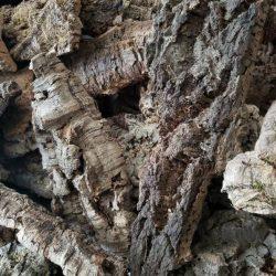 Cork Bark Wholesale - Air Plant Mount, orchid mount
